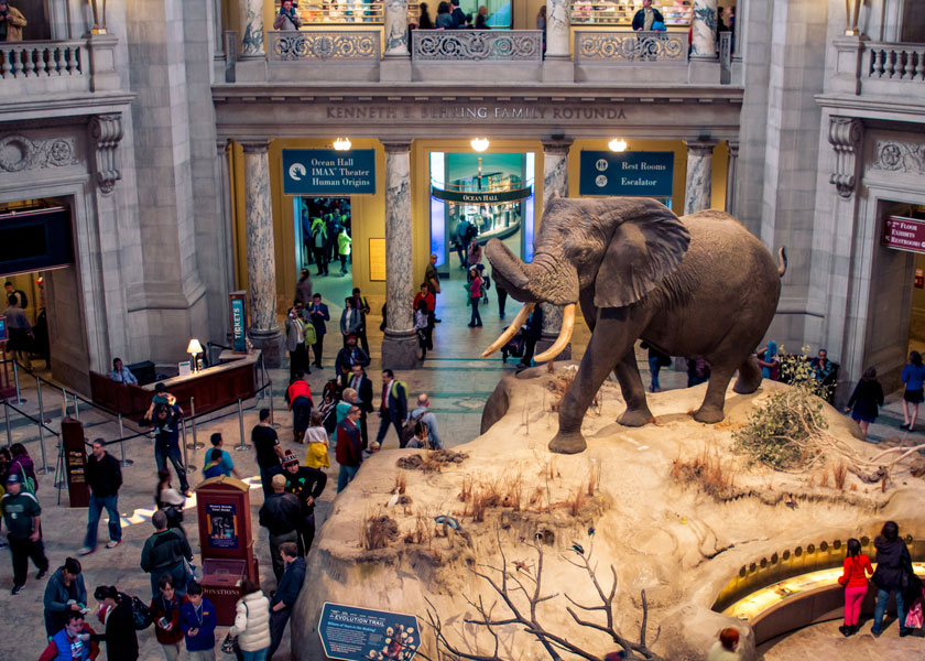 The Museum of Natural History at the Smithsonian